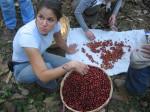 Aida cherries